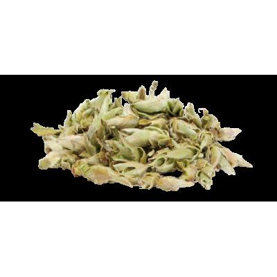 Biała herbata pączki z dziko rosnących krzewów